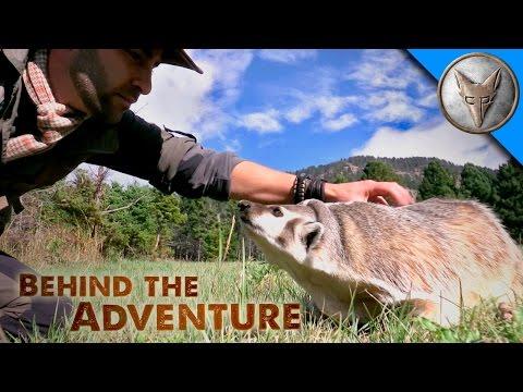 Amazing Badger Encounter!
