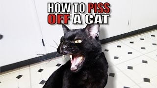 Talking Kitty Cat 50 - How To Piss Off A Cat