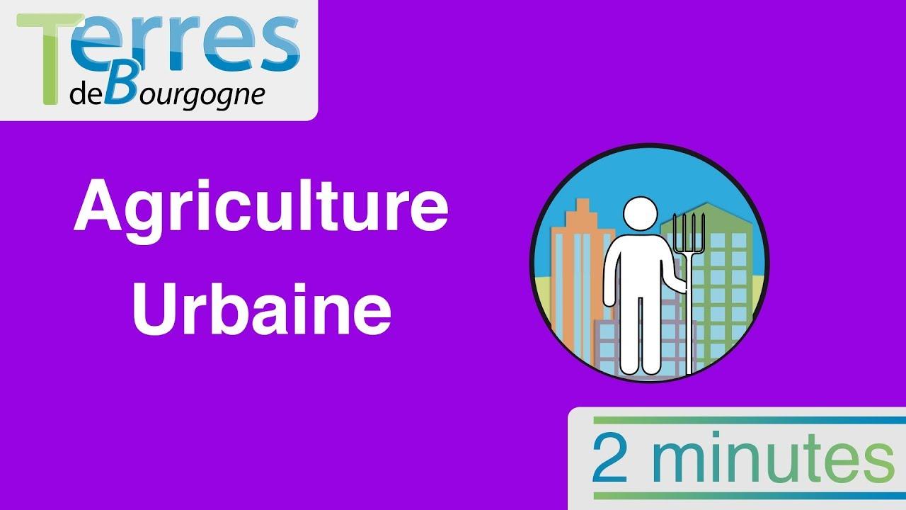 800 millions de personnes pratiquent l'agriculture urbaine : quels sont les enjeux ?
