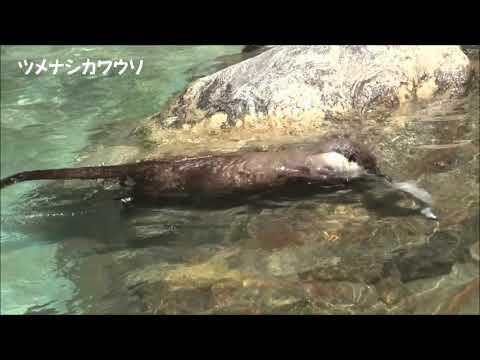 高知県立のいち動物公園 動物たちへ氷のプレゼント 2021年7月22日