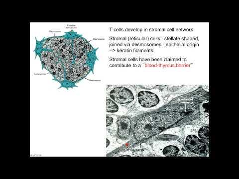 Oltás humán papillomavírus ellen