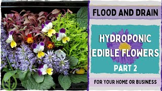 Edible Flowers Part 2 - Germination Update - System Cleanout & Planting - On The Grow