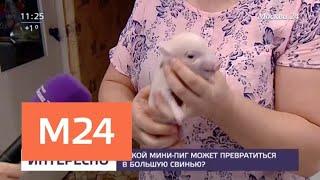 Кого заводят москвичи вместо собак и кошек - Москва 24