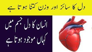 Where Heart Is Located In Human Body In Urdu Insan Ka Dil Kis Side Hota Hai