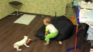 Щенок Джек рассел терьера и ребенок развлекаются