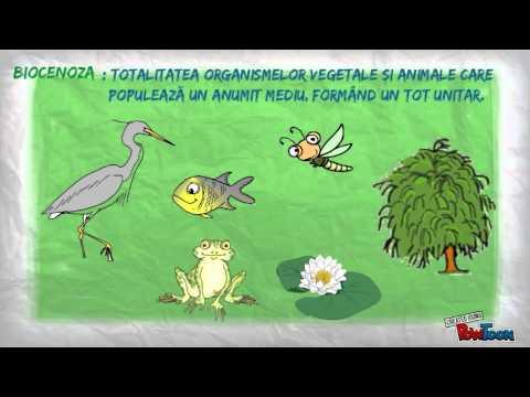nemathelminthes clasice și contohnya