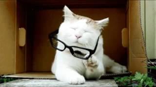 Коты- котики- собачки!!!