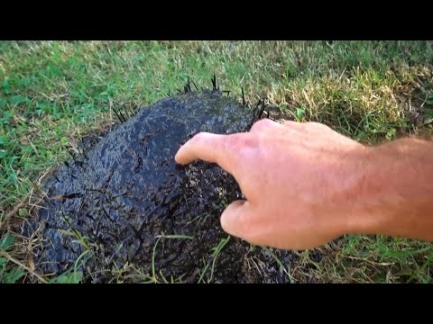 Uncovering the Flex Seal Ant Mound