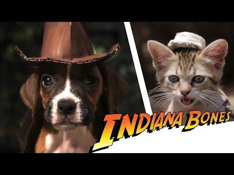 Las Aventuras De Indiana Bones (Huesos)