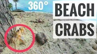 Google Cardboard 360 VR video Crabs Vietnam SBS Samsung Gear VR Box