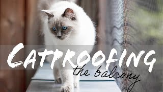 CATPROOFING our balcony: Kittens go outside! | Ragdolls Pixie and Bluebell