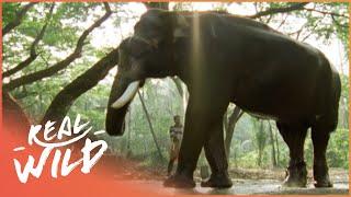 The Dark Side Of Elephants Full Documentary Wild Things Video