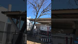 Tree Removal In McKinney, Melissa, Anna, Princeton And Most Of Collin County