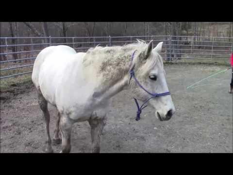 Equine massage - Horse #2