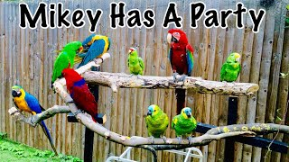 Parrot Party Play Dates & Fly Day || Mikey The Macaw