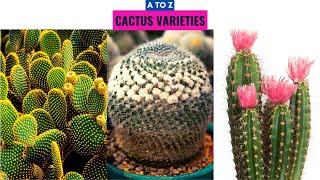 Cactus Varieties A to Z
