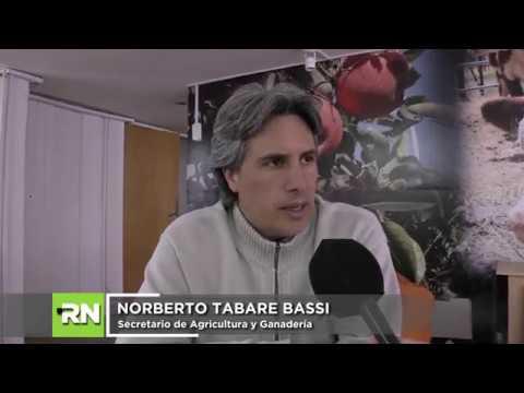 NORBERTO TABARE BASSI