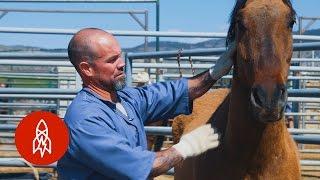 Training Wild Horses With Convict Cowboys