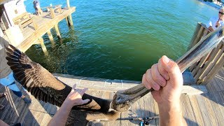 TAUGHT This THIEF A LESSON! Catch N Cook- Snook, Black Drum, Sheepshead (Rod n Reel Pier Fishing)