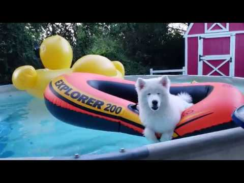 Husky Puppy Jumps In Boat!
