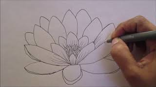 How To Draw A Water Lily Flower (simplified For Beginners)