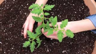 Quick Start Gardening Guide: Container Vegetable Gardening