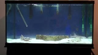 Shark and Stingray Grow Out Aquarium