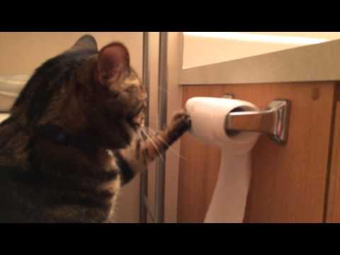 le chat qui range le papier toilette apr s avoir jou avec nuage ciel d 39 azur. Black Bedroom Furniture Sets. Home Design Ideas