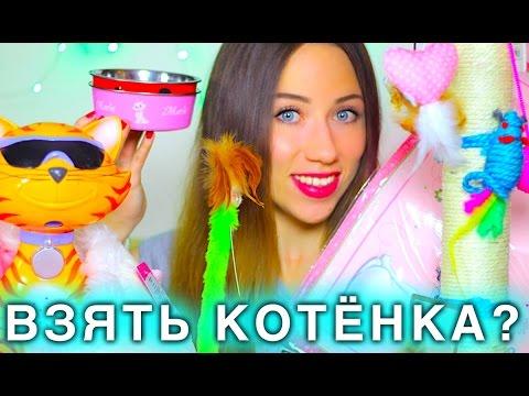 ЧТО НУЖНО ДЛЯ ПОЯВЛЕНИЯ КОТЕНКА - СТАРТОВЫЙ НАБОР ДЛЯ КОШКИ | Elli Di Pets - Cats