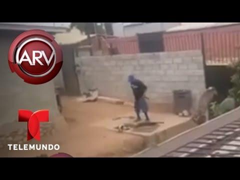 , title :'Arrestan a hombres por maltrato animal en Tijuana | Al Rojo Vivo | Telemundo'