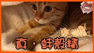 【巧克力】『橘子冰的日常』- 真.蚌殼精 ฅ•ω•ฅ