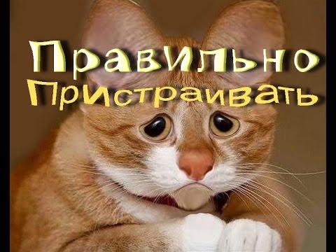 Судьба Рыжего Кота/Как пристроить животное с Улицы/Советы бывалых))