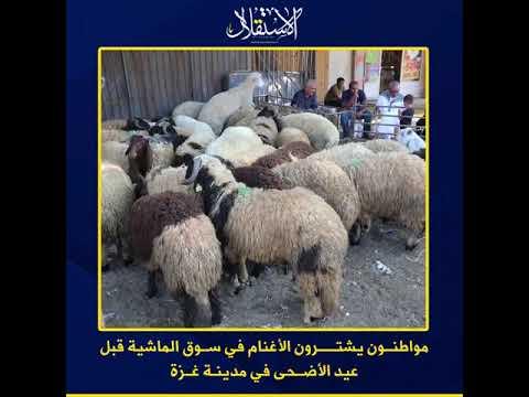 مواطنون يشترون الأغنام في سوق الماشية قبل عيد الأضحى في مدينة غزة