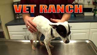 Neglected Dog Recovers at Vet Ranch