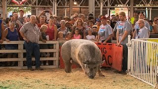 Big Animals   Iowa State Fair 2015