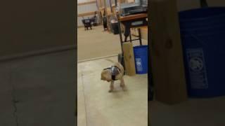 Wing Bat barn doggy