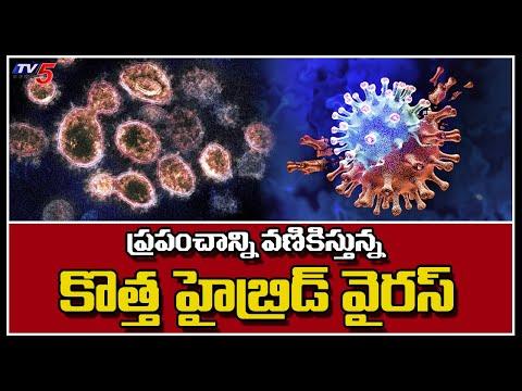 ప్రపంచాన్ని వణికిస్తున్న కొత్త హైబ్రిడ్ వైరస్ | New Hybrid Virus Variant | TV5 News