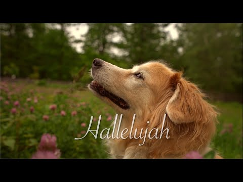 Fall in Love with the Magical Guitar Version of Hallelujah
