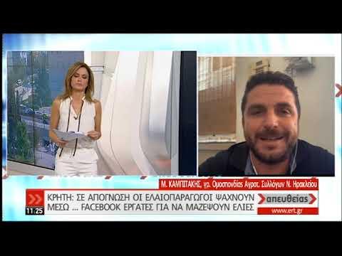 Κρήτη: Ελαιοπαραγωγοί ψάχνουν εργάτες μέσω… Facebook | 30/10/2019 | ΕΡΤ