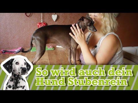 Euren Hund stubenrein bekommen: So erzieht ihr ihn zur Stubenreinheit
