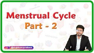 Menstrual Cycle - Part 2