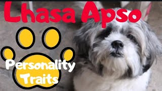 LHASA APSO INTERESTING  FACTS AND PERSONALITY TRAITS