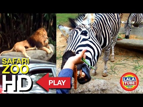 Taman Safari Indonesia Part 1 - Safari ZOO ( With Complete Animal Sound )