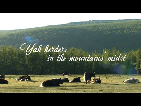 Yak herders in the mountains' midst