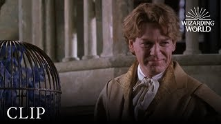 Cornish Pixies | Harry Potter And The Chamber Of Secrets