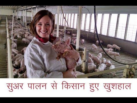 सुअर पालन से किसान हुए खुशहाल
