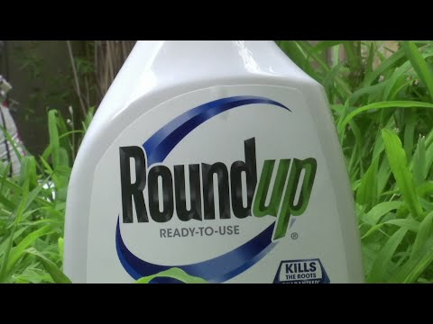 A jury in federal court in San Francisco will decide whether Roundup weed killer caused a California man's cancer in a trial starting Monday that plaintiffs' attorneys say could help determine the fate of hundreds of similar lawsuits. (Feb 25)