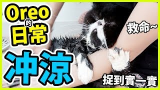 OREO危機來臨!污糟貓終於要洗澡了... |Oreo的日常