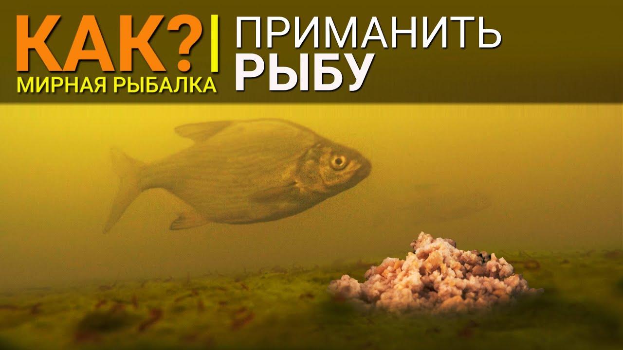 Как приманить рыбу? Эффективное и долгоиграющее приваживание рыбы