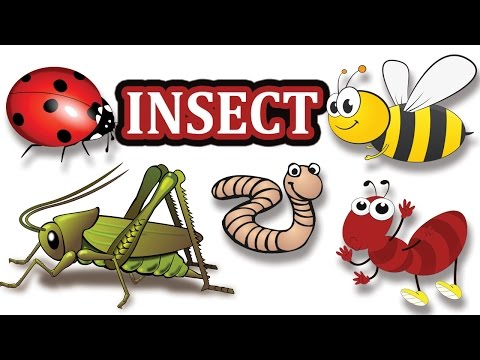 Insects Pictures for Kids-Insect Name-kids vocabulary